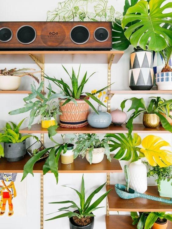 刚装修好的房子放什么植物最好呢?