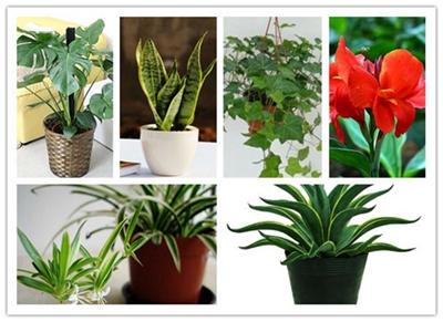 『家居实用』新房装修完,建议摆放这几种绿植!