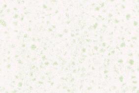 精工玉石BJA01-8*8